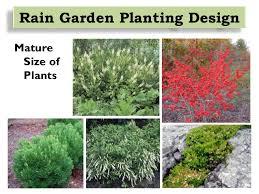 Small Picture Rain Garden Design Installation and Maintenance