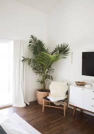 Plant Interior Design Awesome Ideas