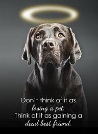 Dog Gone 40 Inspirational Quotes About Losing A Dog Terribly Mesmerizing Dog Death Quotes