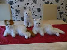 furreal friends large ginger white interactive all white lulu cat rare kitty