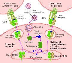 RNA aşısı - Vikipedi