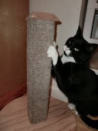 the homemade cat scratching post in action