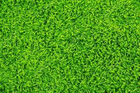 Green carpet texture Stock Photo belchonock 33945707