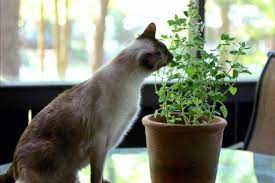 7 plants to grow for cats