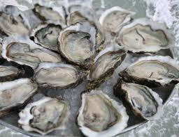Oyster Identification Chart A Guide To The Different Types Of Oysters