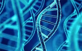 Phát hiện người đàn ông có ADN lâu đời nhất ở Bắc Mỹ - Nhật Báo Calitoday