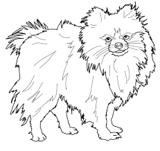 Small Picture Pomeranian dog coloring page Free Printable Coloring Pages