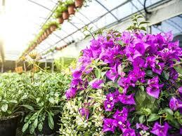 terra garden center garden centres is the second largest specialist garden centre group in the terra terra garden center