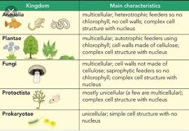 Kingdoms Of Biology Chart Best Chart Making Trick On 5 Kingdom Classification Brainly In