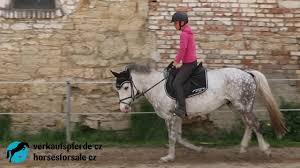 FOR SALE - 2011 pony - ARMANI pony schooling - YouTube