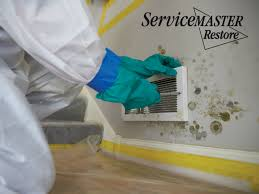 mold removal and prevention