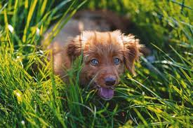 Allergies in Dogs: Signs, Symptoms, & Treatment | Canna-Pet
