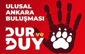 Hayvan hakları örgütleri Ankara'da eyleme hazırlanıyor - bianet