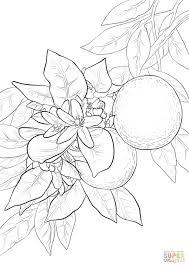 Disegni Mandala Facili Da Colorare Fiori Da Colorare Disegni Da Con