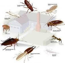 34 Best Pest Control Brisbane Images Brisbane Bed Bugs Ants