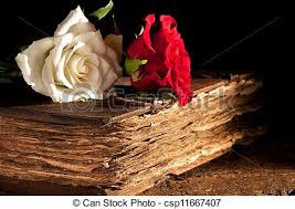 flowers on antique book csp11667407