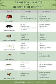 Beneficial Insects Chart 14 Beneficial Insects For Garden Pest Control Infographic