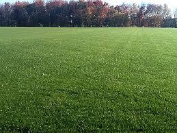 soccer field grass. Capital Area Soccer Association Field Grass