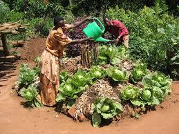 Keyhole Garden Design Amazing Uganda Style Keyhole Garden This Basically Is Like A Raised Bed With