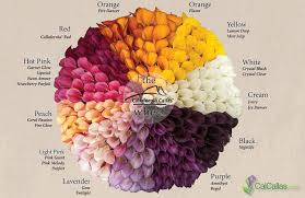Calla Lily Flower Colors Calla Lily Colors Calla Lily