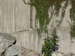Gardens Climbing Plants  Life And Style  The GuardianWall Climbing Plants Crossword
