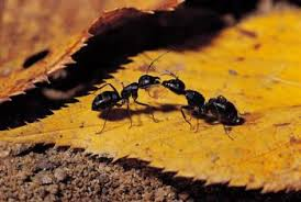 garden ants. While They Are Tiny, Ants Can Pose A Big Problem For Some Backyard Gardeners. Garden