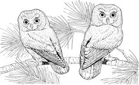 Owl Coloring Pages Adults Printable Coloring Page For Kids