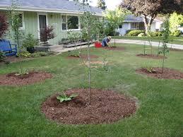 Underplanting Citrus In PotsUnderplanting Fruit Trees