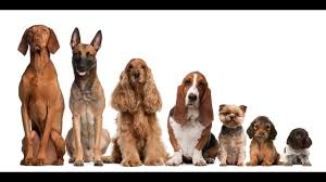 Size Comparison Of Dog Breeds Funky Smile