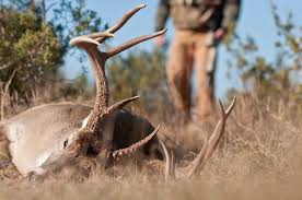 Whitetail Deer Feeding Chart When Is The Best Time To Deer Hunt Grand View Outdoors