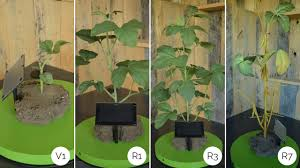 Snapshots Of Crop Growth Using Soybean Plant Models