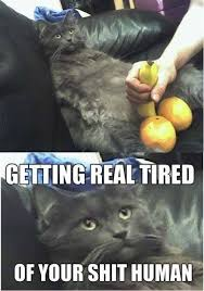 Getting Real Tired Cat Meme - Cat Planet   Cat Planet via Relatably.com