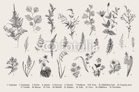Spring Flowers And Ferns Set Vintage Vector Botanical Illustration