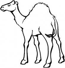 Small Picture drawings of camels Camels coloring pages Super Coloring