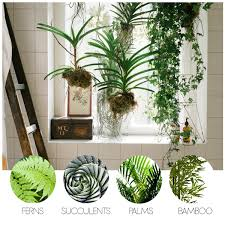 turn your bathroom into an oasis with these indoor bathroom plants elle decoration