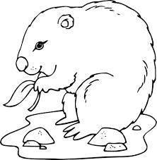 Coloriage Marmotte Dessin Imprimer Sur Coloriages Info