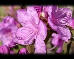 free spring flowers screensaver