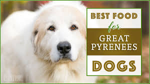 Best Dog Food For Great Pyrenees Top Puppy Adult Senior