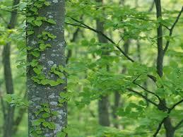 Green Tree Wallpaper 4K