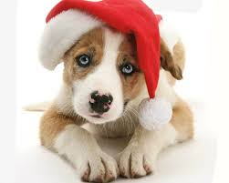 cute animal christmas backgrounds.  Animal Animal Puppy Muzzle Dog Cute Santa Hat Christmas Wallpaper In Backgrounds R
