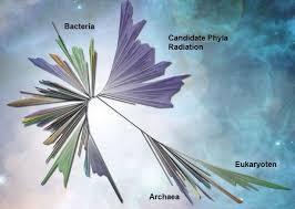 Der stammbaum spielt eine wichtige rolle in der ahnenforschung. Baum Des Lebens Wird Umgebaut Zwei Von Drei Asten Im Neuen Stammbaum Umfassen Nur Bakterien Scinexx De