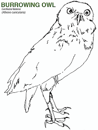 Burrowing Owl Coloring Sheet