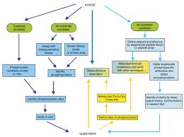 Protein Purification Chart Protein Analysis In Vitro