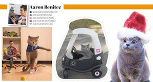 Aaron Benitez - Pets Magazine in New York | Dogs Magazine | Cats Magazine