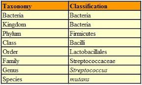 Bacteria Classification Bacterial Taxonomy 1 Classification Based On Morphology