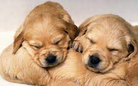 Cute Puppy Wallpapers - Wallpaper Cave