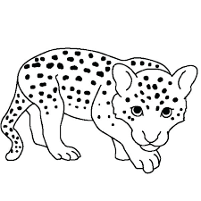 Baby Seal Coloring Pages Page Leopard Navy Seals Colouring Harp