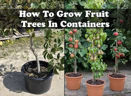 HowToGrowFruitTreesInContainersjpgWhen Do You Plant Fruit Trees
