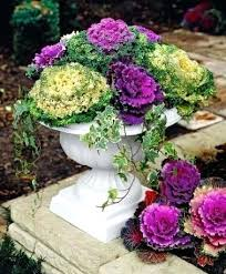 flowering winter cabbage ornamental cant stand when people put fake flowers in outdoor pots especially in outdoor artificial flowers