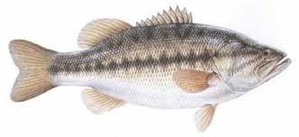 Lake Wylie North Carolina Us Fish Identification Chart